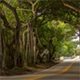 a canopy road covered by green trees in Hobe Sound, Florida, JAISIN Insurance Solutions